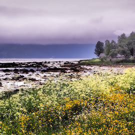 Seaside  by Roy Friskilæ - Landscapes Prairies, Meadows & Fields ( trees, sea, meadows, beach, olympus omd 10 mark 2, landscape, flowers, fauske, norway )