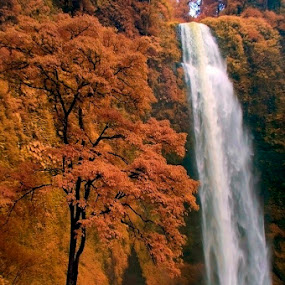 Autumn Waterfall by Marlon Managi - Landscapes Forests ( hill, waterfall )