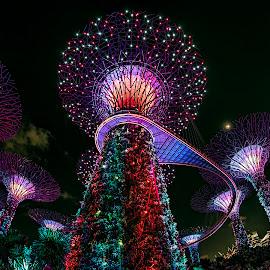 United Colors! by Gordon Koh - City,  Street & Park  City Parks (  )