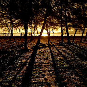 Shadows by Mohamad Sa'at Haji Mokim - Nature Up Close Trees & Bushes ( sunset )