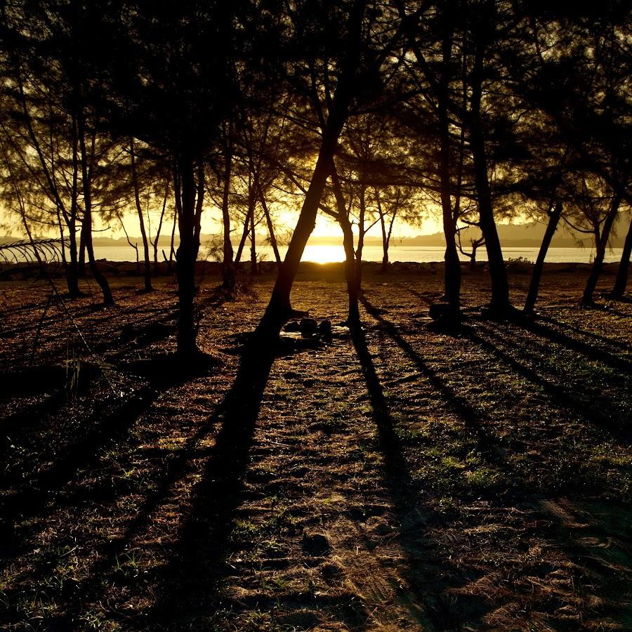 Shadows by Mohamad Sa'at Haji Mokim - Nature Up Close Trees & Bushes ( sunset )