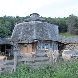 Hexagon Barn by Rita Goebert - Buildings & Architecture Architectural Detail ( vermont; hexagon barn; cows; back roads of vermont;, ludlow )