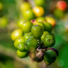 Coffee Fruites by Kriswanto Ginting's - Food & Drink Fruits & Vegetables