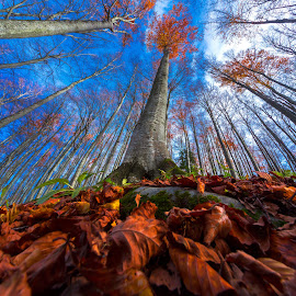 Fall in the beech forest by Stanislav Horacek - Nature Up Close Trees & Bushes