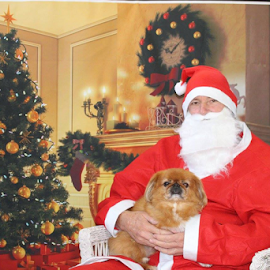 Santa and my Pooch by Terry Linton - Public Holidays Christmas