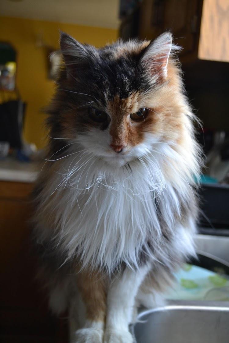 The Masked Kitten
