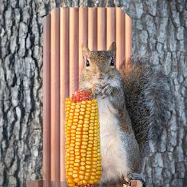 Snack Time by Ellen Yeates - Animals Other ( austin, canon, wild, flash, ellen yeates, texas, snack, spring, corn, portrait, time, tree, food, pet, mark iii 5d, branch, eating, squirrel, animal )