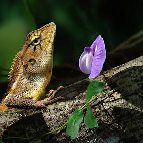 Enjoy wild flower. by Dzuy My - Animals Reptiles