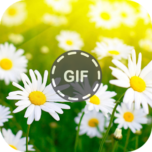 Download Flower Gifs For PC Windows and Mac
