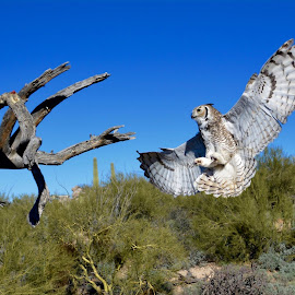 Our Amazing Desert Museum by John Gheen - Animals Birds
