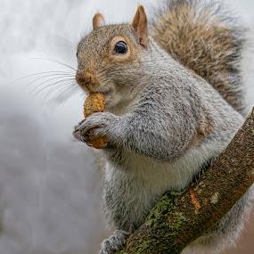 Emma by Kathy Jean - Uncategorized All Uncategorized ( kathyjean, nut, mammal, squirrel, animal,  )