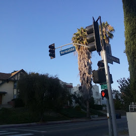 NORMANDIE by Stephany Gee - City,  Street & Park  Historic Districts ( c, california, street, contest, los angeles, historic )