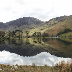 The Buttermere Pines by Carol Lauderdale - Landscapes Mountains & Hills ( lakes and mountains, reflections, english lake district, pine trees, buttermere )