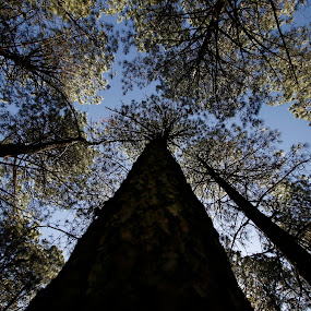 the big tree by Cristobal Garciaferro Rubio - Landscapes Forests ( sky, tree, blue, green, leaf, leaves, branches )