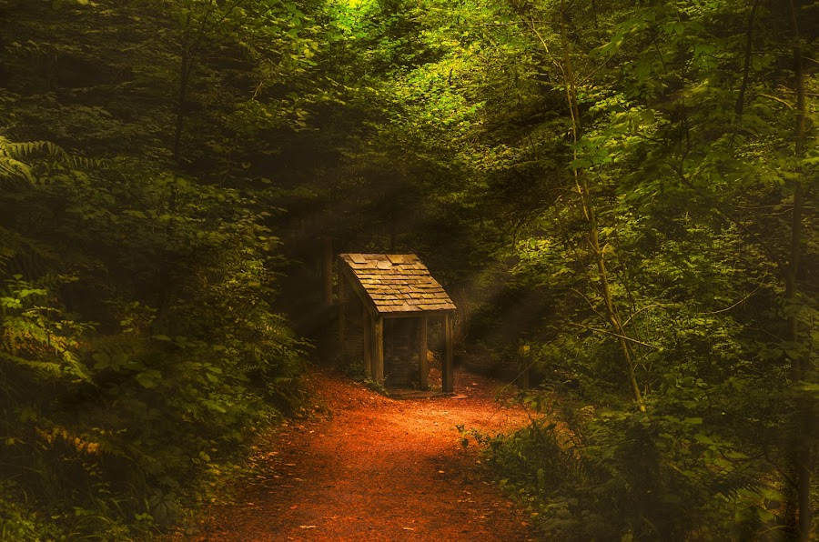 Magical hideaway by Graham Kidd - Landscapes Forests ( green, trees, forest, woods )