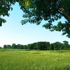 The digital art of green field and tree. by Mihir Ranjan - Digital Art Places ( green field, green trees, digital art, green nature, paddy green field, digital art of green field and tree. )