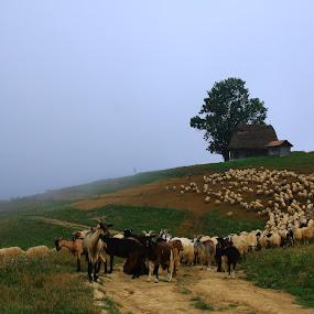 Morning fog by Flaviu Negru - Landscapes Mountains & Hills (  )