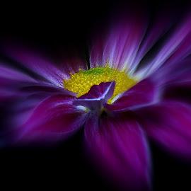 Purple Haze by Kathryn Willett - Digital Art Things ( macro, purple, photography, flower, focal zoom )