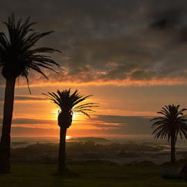 The Three Amigos! by Lydia Lacerda - Landscapes Sunsets & Sunrises ( clouds, sunset, palm trees, beach )