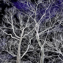 Tree Art  by Mary Waters - Digital Art Things ( abstract, nature, art, trees, landscape )