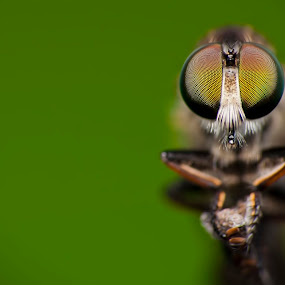 Resting by Nadzli Azlan - Animals Insects & Spiders