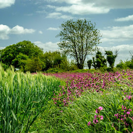 Campion and Corn by Heather Ryder - Landscapes Prairies, Meadows & Fields ( clouds, field, campion, sky, grass, green, trees, pink, corn )