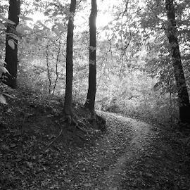 Пътека by Georgi Kolev - Black & White Landscapes ( тих., природа., ден., летен., топъл. )