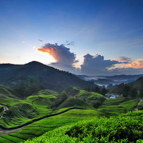 A Morning @ Tea Valley by Steven De Siow - Landscapes Mountains & Hills ( landscape photography, scenery, valley, landscape, tea )