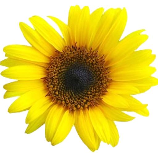 Flower decoration widget (app)