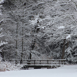 Winter Bridge by Richard Crosier - Landscapes Weather ( park, nature, snow, trees, landscapes,  )