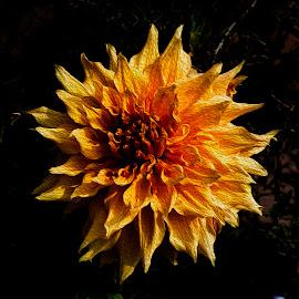 Dahlia by Pravine Chester - Digital Art Things ( digital art, digital painting, dahlia, flower, manipulation )
