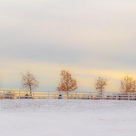 by John Shelton - Landscapes Prairies, Meadows & Fields ( reno, nevada, rancho san rafael, snow, nv, clouds, trees, landscape,  )