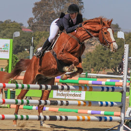 Showjumping by Dirk Luus - Sports & Fitness Other Sports ( showjumping )