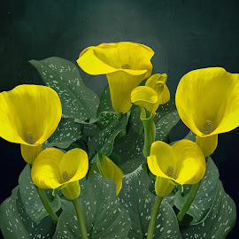 Yellow Calla Lilies by Joseph Vittek - Digital Art Things ( plant, lilies, cally lily, calla, garden, flower )
