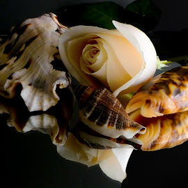 Rose and shells by Dave Walters - Artistic Objects Still Life ( rose, macro, sea life, sea shells, nature, colors, flowers, lumix fz2500 )