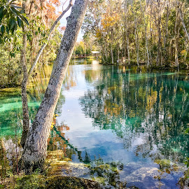 Three Sisters Springs by Shari Linger - Instagram & Mobile iPhone ( florida, crystal river, cold snap, three sisters springs, manatees )