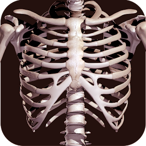 Osseous System in 3D (Anatomy) For PC (Windows & MAC)