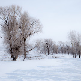 Snowscape by Vinod Kalathil - Landscapes Weather ( winter, wyoming, snow, white, united states )