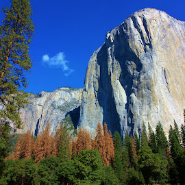Yosemite El Capitan in the Fall by Karen Coston - Landscapes Travel ( national park, fall colors, autumn, yosemite, el capitan, fall, granite )