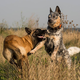 Best friends by Wendy Chlum - Animals - Dogs Playing ( playing, dogs, outside, animal )