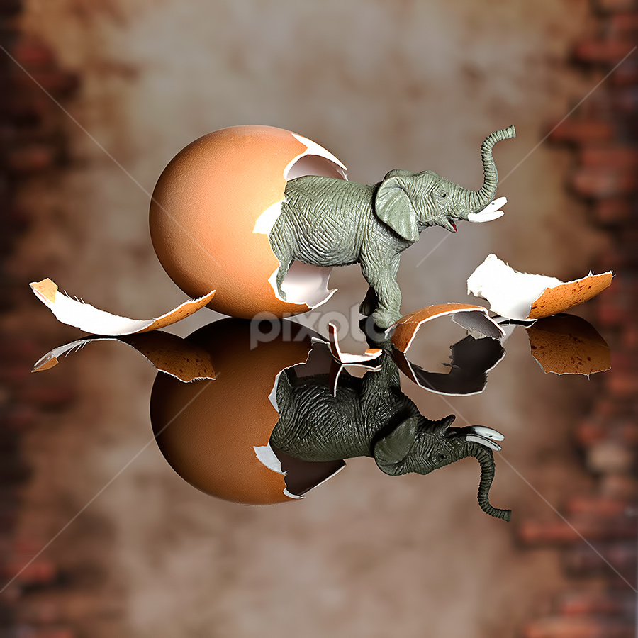 Newly Born by Ganjar Rahayu - Artistic Objects Toys ( reflection, elephant, still life, toys, egg shell )