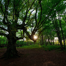 Caught by Nature by Stewart Winton - Landscapes Forests ( forrest, sunset, trees, woodland, woods )