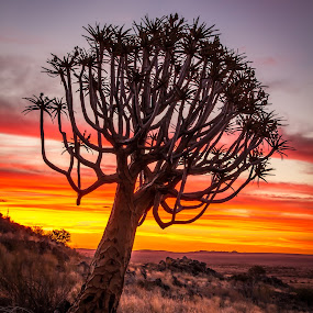 green kalahari by Theuns de Bruin - Landscapes Deserts ( g k )