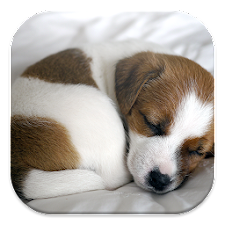 Puppy Dog Live Wallpapers