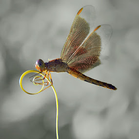 on the twirl by Tele Nicotin - Animals Insects & Spiders