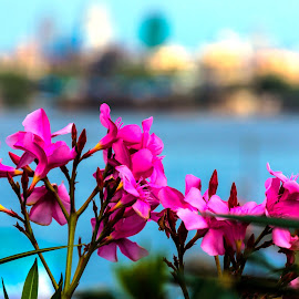 Flowers in the foreground by Hariharan Venkatakrishnan - Flowers Flower Gardens (  )