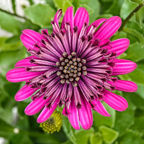 by Dee Haun - Flowers Single Flower ( flowers, pink, single flower, mauve middle, 180415f1653rce1,  )