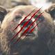 Bear Hunting 2017
