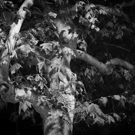 by Martha Irvin - Black & White Landscapes
