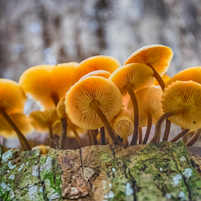 The Family by Nitescu Gabriel - Nature Up Close Mushrooms & Fungi ( mushroom, europe, macro photography, beautiful, romania, close up, close, macro, european, tree, nature, color, light, natural, closeup, mushrooms )
